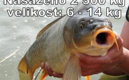 zvk24-4-2013-(1)